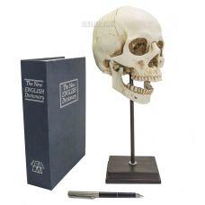Макет черепа на подставке,высота 35 см